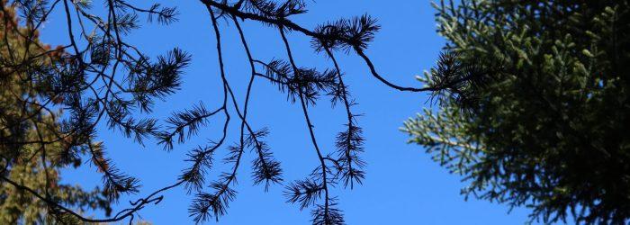 arbres_ciel